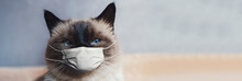 Portrait Of Siamese Cat With B...