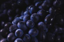 Dark Grapes Close-up With Water Drops. Horizontal Macro.
