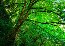 Trees Overgrown With Greenery ...