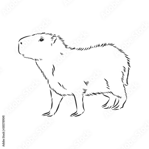 Capybara hand drawing Wallpaper Mural