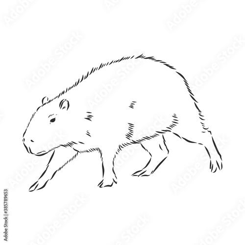 Photo Capybara hand drawing