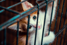 Small Kitten Color Tabby In Th...