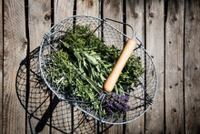 Basket With Freshly Harvested Herbs