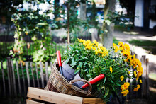 Flower Pots And Hand Trowels In Basket And Wooden Box At Garden