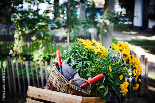 Fotografering Flower pots and hand trowels in basket and wooden box at garden