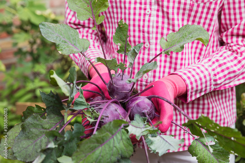 Tela Close-up of woman holding common beet in urban garden