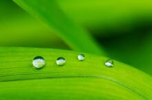 Raindrops On GreenÔøΩlilium...