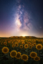 Scenic View Of Milky Way Over Sunflower Field