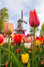 View Of Windmill In Keukenhof Garden