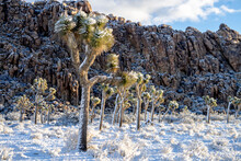 Scenic View Of Joshua Tree National Park After Snowstorm During Sunrise
