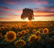 View Of Tree In Sunflower Fiel...