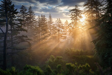 Scenic View Of Forest During Sunrise