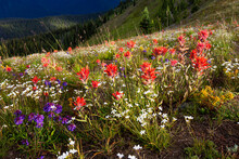 View Of Wildflowers Blooming In North Cascades