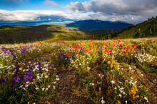 View Of Wildflowers Blooming I...