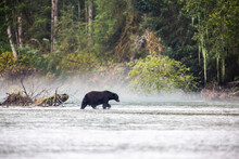 Brown Bear Fishing For Salmon ...