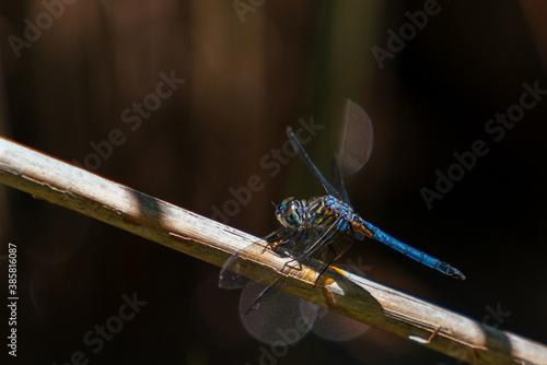 Carta da parati Close up of dragonfly in Congaree National Park