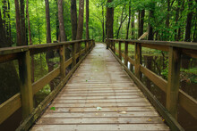 View Of Boardwalk Passing Through Forest In Congaree National Park