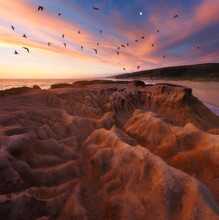 Birds Flying Over Beach During...