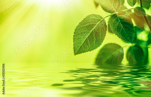 Obraz Green leaves and spring water, eco nature and bio energy background design - fototapety do salonu