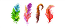 Set Of Watercolor Feathers Of ...