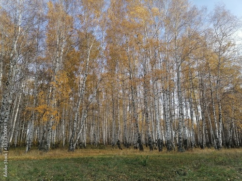 autumn trees with remnants of yellow leaves © Solomko