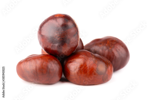Horse chestnuts fruits, isolated on white background. Aesculus hippocastanum.