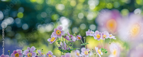 Obraz Beautiful wild flowers purple wild floral garden in morning haze in nature close-up macro. Landscape wide format, landscape banner as artistic image. Relaxing, romantic blooming flowers, love romance  - fototapety do salonu