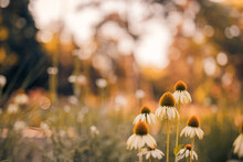 Meadow Flowers In Sunset Fresh...