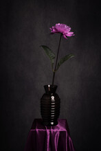 Autumn Studio Still Life With Purple Pink Flower In Glass Vase In Rembrandt Style