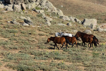 Photos Of Wild Horses Fed In T...