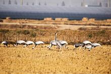 Korean Winter Migratory Birds