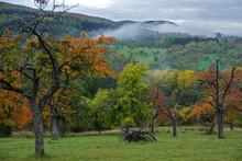 Streuobstwiese Im Herbst Am Fuße Der Schwäbischen Alb