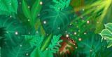 monstera leafs