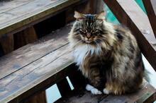 Un Gatto Su Una Scala