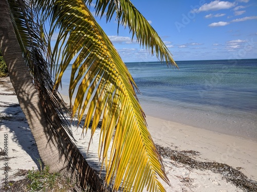 Shady palm tree beachside in the Florida Keys. Wallpaper Mural