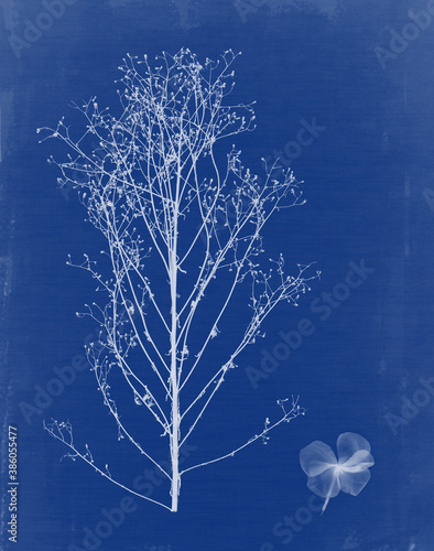 Cyanotype with plants and flowers