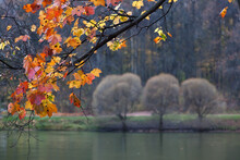 The Autumn In Tsaritsyno Park In Moscow
