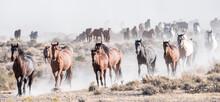 Wild Horse Photography