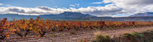 Vineyards In Autumn, Orange And Red Leaves, Mountains In The Background And Blue Sky
