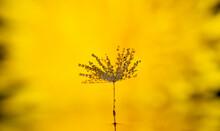 Closeup Photo Of Dandelion See...