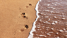 Deep Footprints Of Human Bare Feet On A Beach With Smooth Brown Wet Sand To The Left Of The Sea With Clear Water And A Narrow Strip Of White Foam Along The Edge.