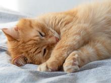 Cute Sleeping Red Cat On A Gra...