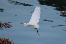 A White Heron Flying Over The ...
