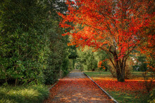 Autumn Season In The Park With...