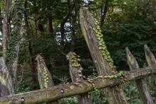 蔦の絡まった木の柵