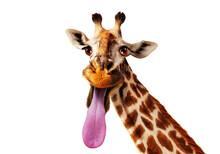 Funny Close-up Photo Of Giraff...