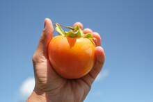 Farmer Hand Hold A Tasty Orang...