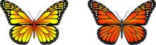 Danaus Plexippus Butterfly Vec...
