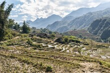 Rice Fields, Rice Terrace Paddy In Sa Pa Lao Cai Vietnam In Asia