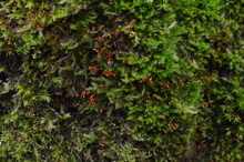Thick Layer Of Moss On The Tree Bark